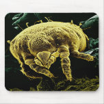 Microscopic Arthropod Acari Mite Lorryia Formosa Mouse Pad