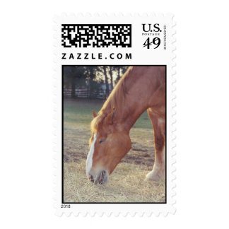 Mid-day Snack - postage stamps