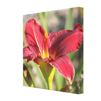 Midday Sunlight Red Daylily: Wide Angle View Gallery Wrap Canvas