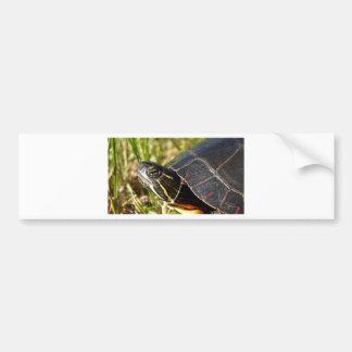Midland Painted Turtle Bumper Sticker