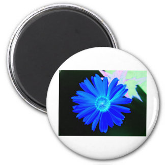 Midnight Blue Day Lily Magnet