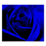 Midnight Blue Rose - poster/print