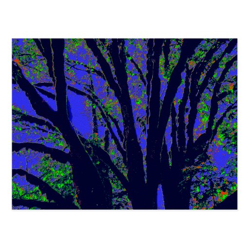 Midnight Forest Post Card