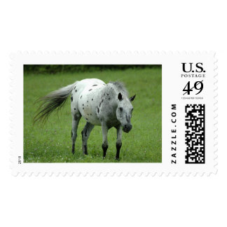 Midnight-Funky Postage Stamp