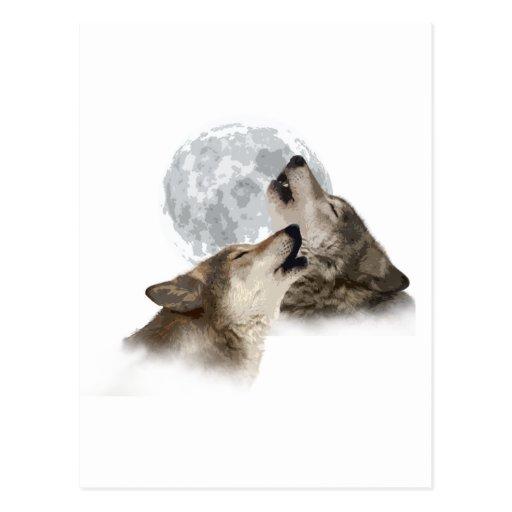 Midnight Howling Postcard