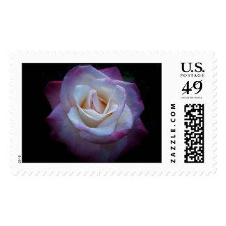 Midnight Rose Stamp