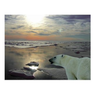 Midnight sun & polar bear, Arctic Ocean Postcard