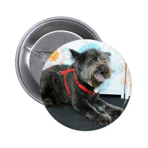 Midnite - Carin y mezcla del perro chino Pin