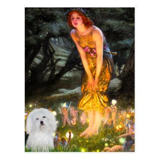 Midsummers Eve - Coton de Tulear 4 Post Card