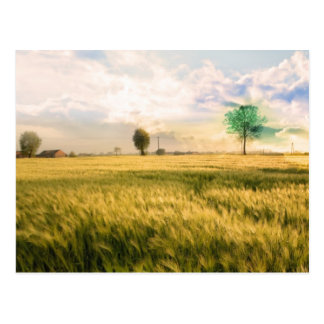 Midwest Field Painting Postcard