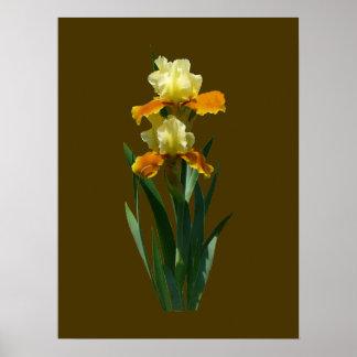 Miel del iris esmaltada póster