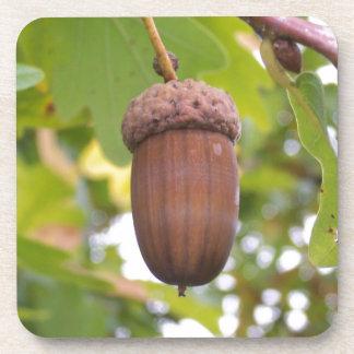 Mighty Acorn in an Oak Tree Coasters