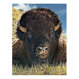Mighty Bison Postcards