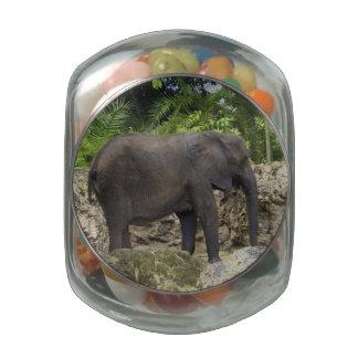 Mighty Elephant Glass Jars