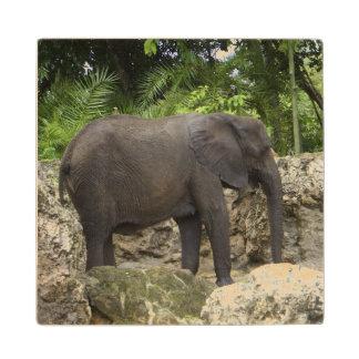Mighty Elephant Wooden Coaster