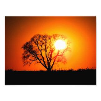 Mighty Oak Sunset Photo Print