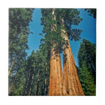 "Mighty Redwood Ceramic Tile<br><div class=""desc"">A mighty redwood as found in Sequoia National Park,  California</div>"
