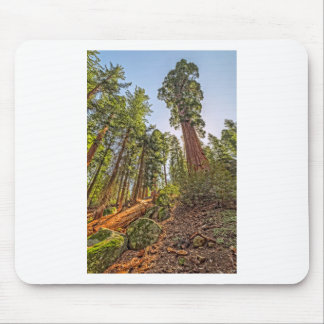 Mighty Sequoia Mouse Pad