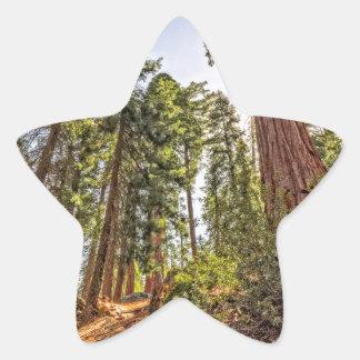 Mighty Sequoia Star Sticker
