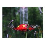 Migración del colibrí de la caída postal