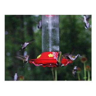 Migración del colibrí de la caída tarjeta postal