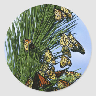 Migración del monarca etiquetas redondas
