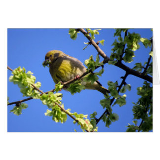 Migrating bird eating young elm leaves card
