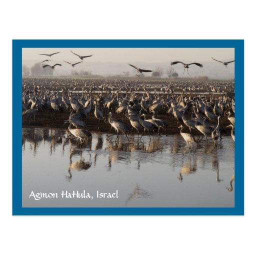 Migrating Birds Postcard