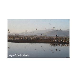 Migrating Cranes Stretched Canvas Print
