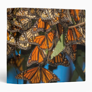 Migrating monarch butterflies cling to leaves binder