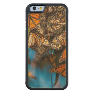 Migrating monarch butterflies cling to leaves carved maple iPhone 6 bumper case
