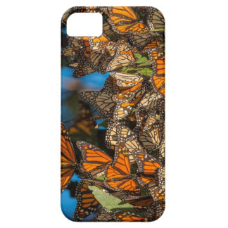 Migrating monarch butterflies cling to leaves iPhone SE/5/5s case