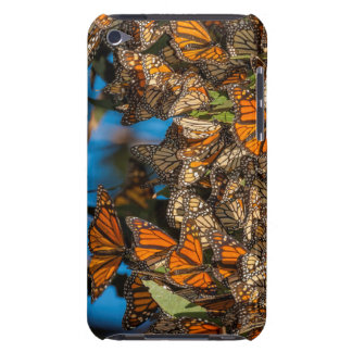 Migrating monarch butterflies cling to leaves iPod Case-Mate case