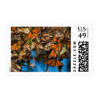 Migrating monarch butterflies cling to leaves postage