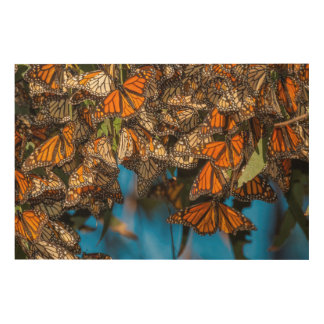 Migrating monarch butterflies cling to leaves wood print