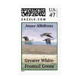 Migrating White Fronted Geese Birds Wildlife Postage