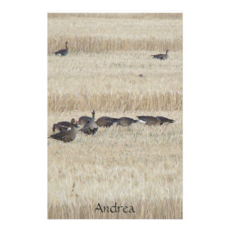 Migrating White Fronted Geese Birds Wildlife Stationery