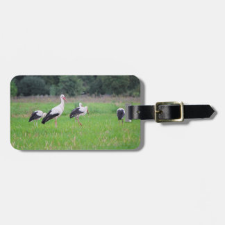 Migrating white storks, ciconia, in a meadow luggage tag
