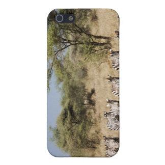 Migrating zebra, Tanzania Case For iPhone SE/5/5s