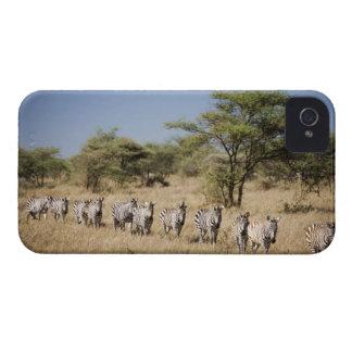 Migrating zebra, Tanzania Case-Mate iPhone 4 Case