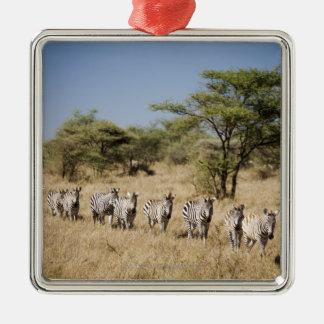 Migrating zebra, Tanzania Christmas Tree Ornaments