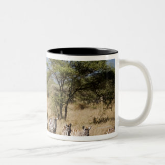 Migrating zebra, Tanzania Coffee Mugs