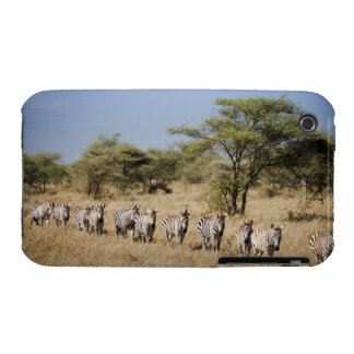 Migrating zebra, Tanzania iPhone 3 Case-Mate Cases