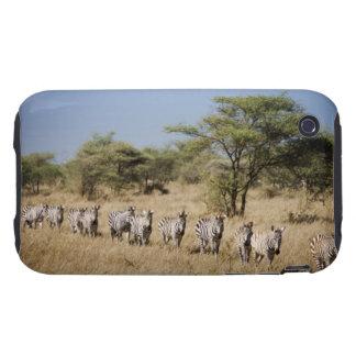 Migrating zebra, Tanzania iPhone 3 Tough Cases