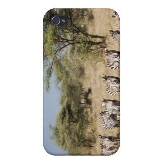 Migrating zebra, Tanzania iPhone 4 Cases