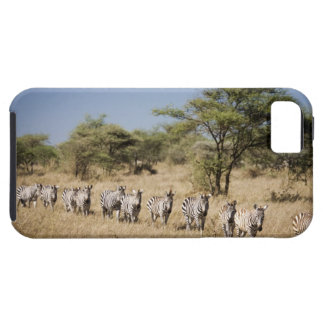 Migrating zebra, Tanzania iPhone 5 Case