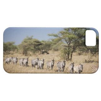 Migrating zebra, Tanzania iPhone 5 Covers