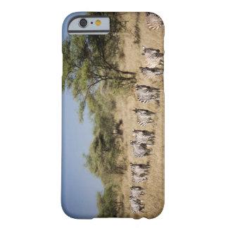 Migrating zebra, Tanzania iPhone 6 Case