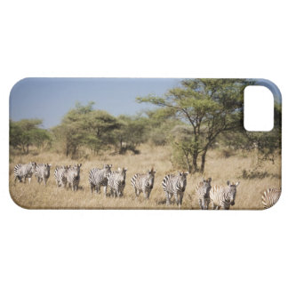 Migrating zebra, Tanzania iPhone SE/5/5s Case