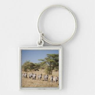 Migrating zebra, Tanzania Key Chain